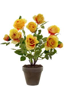 Rosenbusch 46 cm gelb im Topf