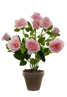 Rosenbusch rosa 46 cm im Topf