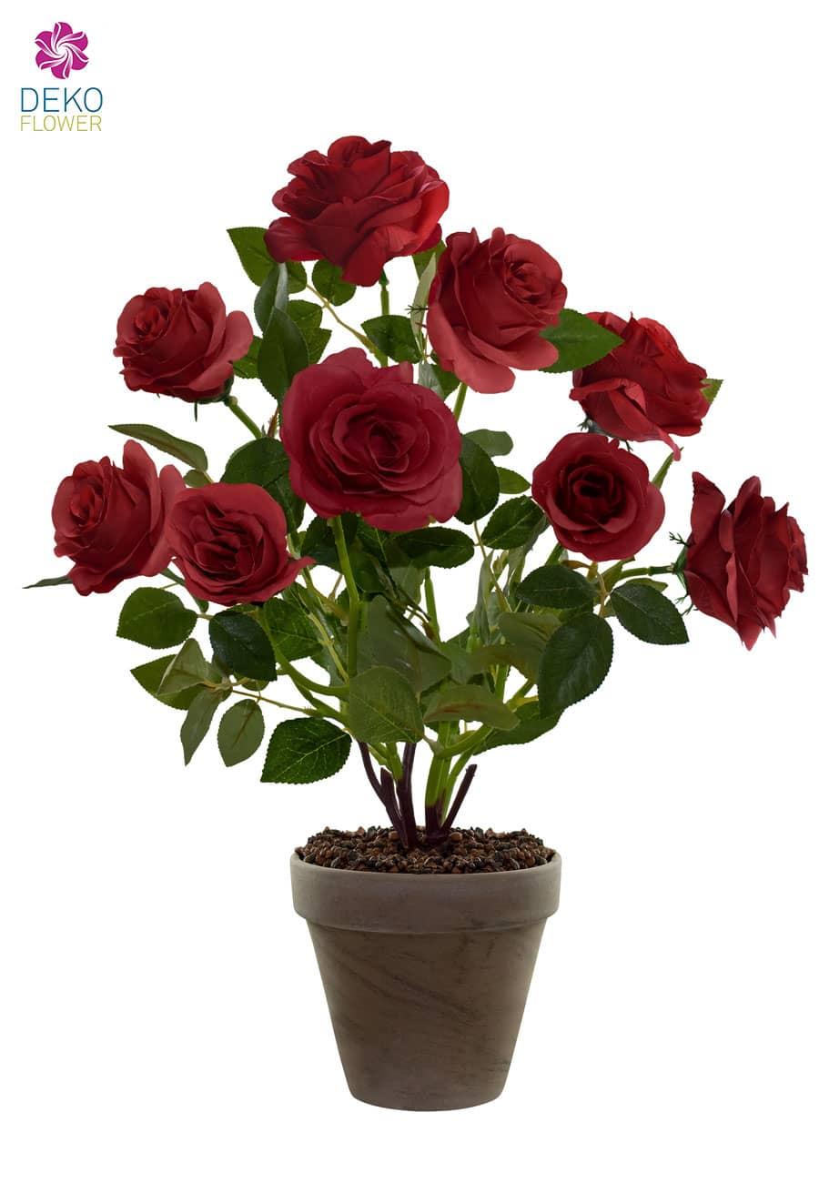 Roter Rosenbusch getopft 46 cm
