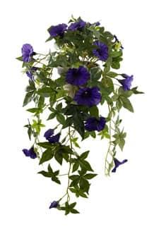 Trichterwinde Rankpflanze violett 60 cm