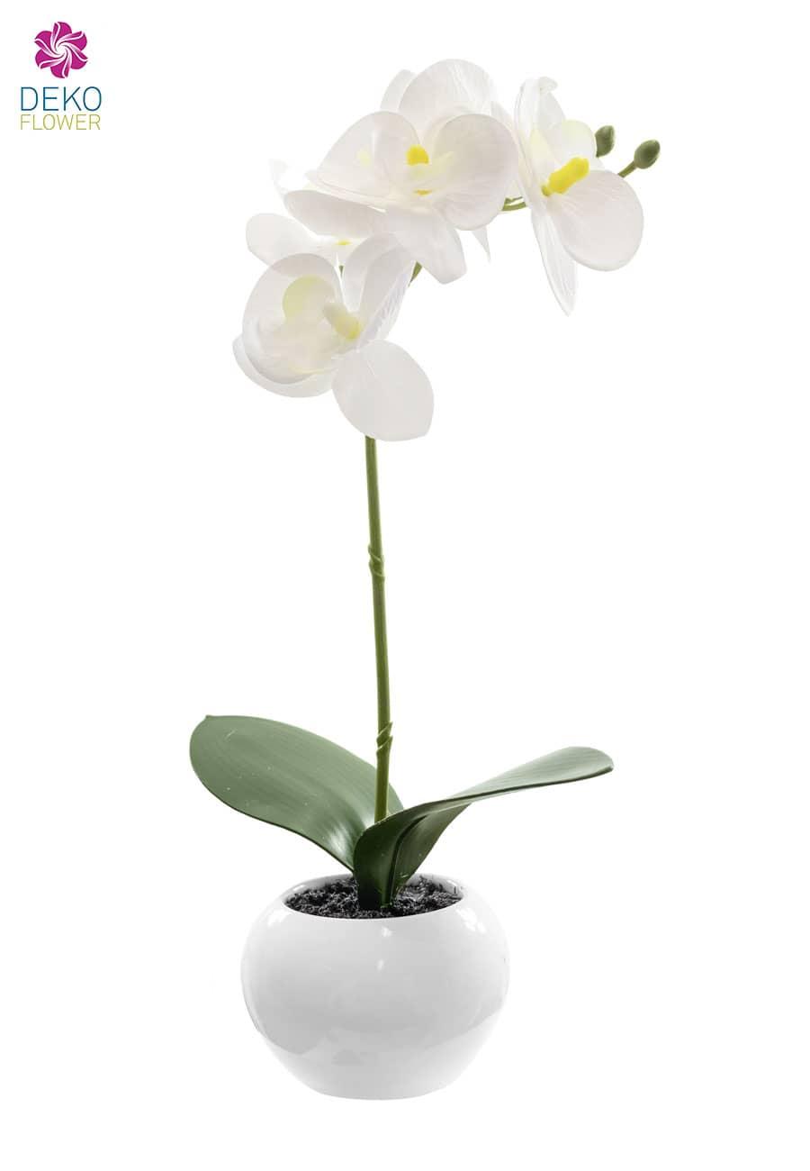 Weiße Orchidee in Keramiktopf 35 cm