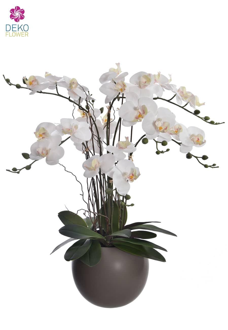 Weiße Orchidee Phalaenopsis im Keramiktopf 70 cm