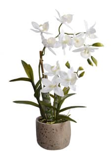Weiße Orchidee »Cycnoches« 45 cm getopft
