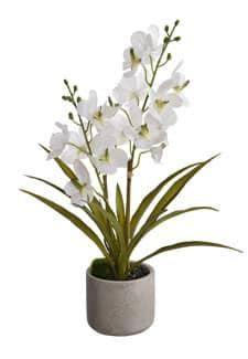 Weiße Orchidee im Topf »Ascocenda« 50 cm