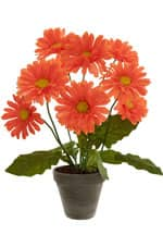 Gerbera Topfpflanze orange 49 cm