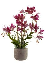 Künstliche Orchidee »Real Touch« 51 cm lila