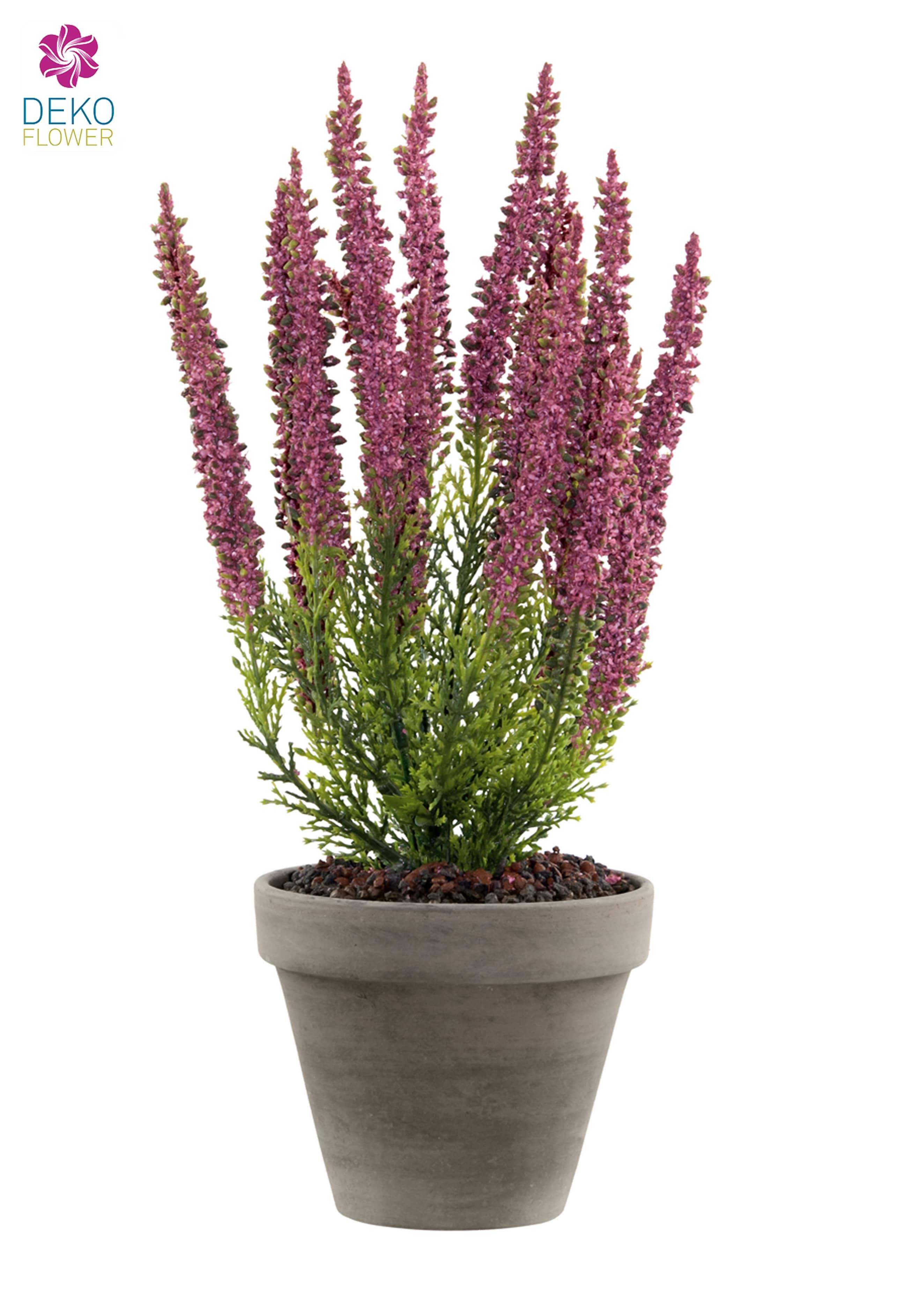 pflanzen die keine sonne brauchen interesting waldsegge. Black Bedroom Furniture Sets. Home Design Ideas